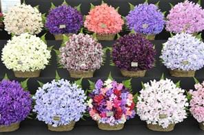 Blenheim Palace & Flower Show