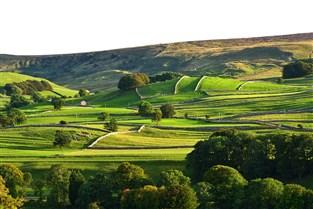 Gold Yorkshires Beautiful Dales