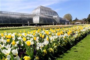 Spring at Kew & Chiswick