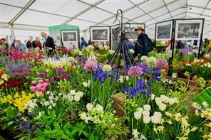 Malvern RHS Spring Festival 2021