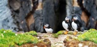 Isle of Anglessey & Puffin Island