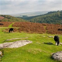 Dartmoor Scenic with Lunch