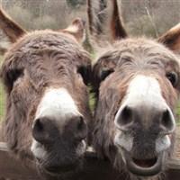 Sidmouth & Donkey Sanctuary GOLD