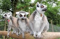 Dudley Zoo & Gardens