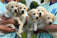 National Guide Dog Breeding Centre