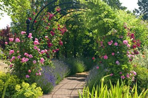 Royal National Rose Society Open Gardens St Albans