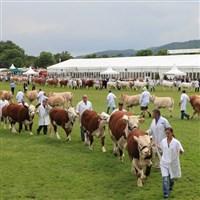 Malvern Three Counties Show